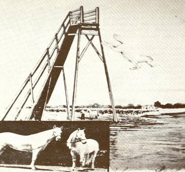 High Diving Horses At Tacoma Inn, 1915